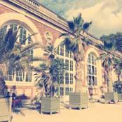 image palmier