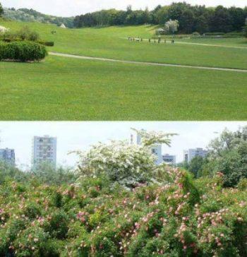 Parc de la Courneuve Paris